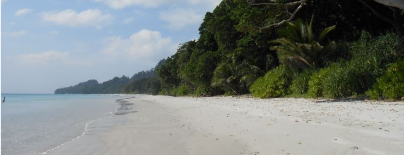 Beach with dense trees on the side
