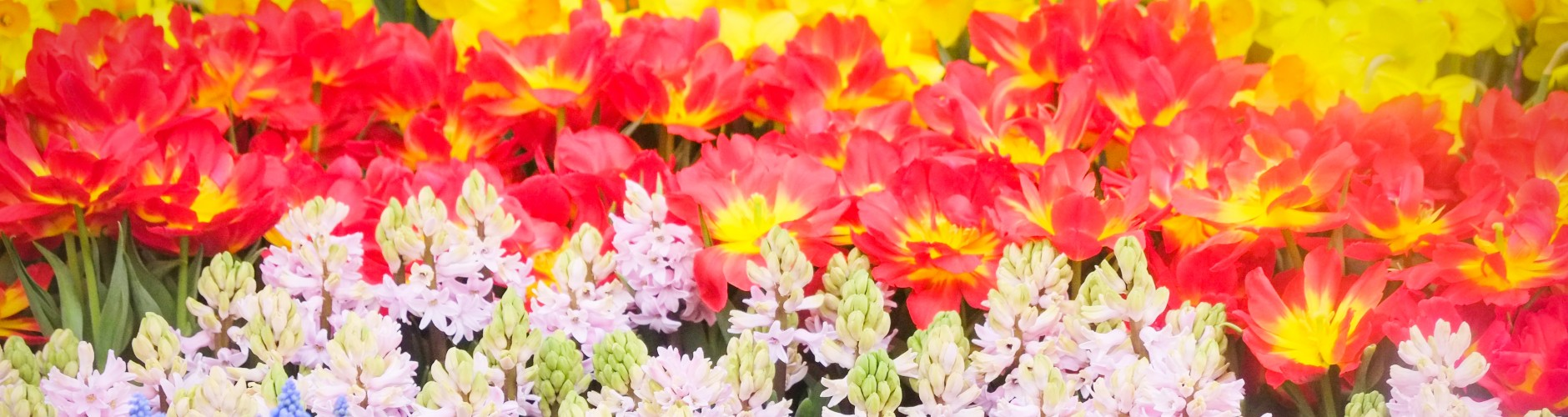 Combination of red, yellow and white flowers