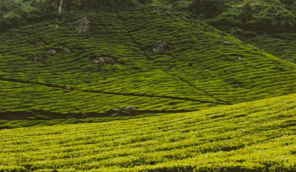 hills in tamil nadu